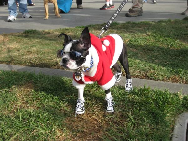 Dog Treats Marshals