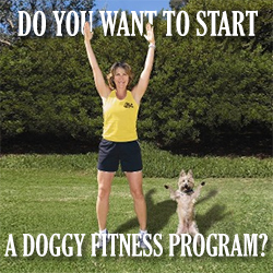 Start Your Own Doggy Fitness Program