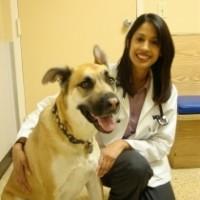 Dog Obesity Veterinarian Priti