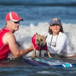 Surfing with your dog at the Helen Woodward Surf Event!