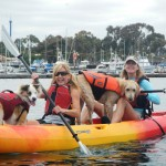 Kayaking with your dog can be an ADVENTURE