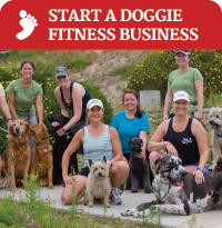 Start a Doggie Fitness Business