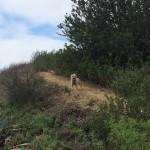 Dog Friendly Trails