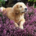 Essential Oils for Your Dog