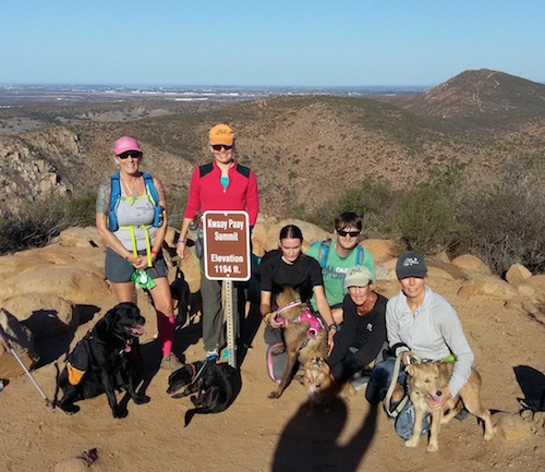 Chantry Flats Hike - Leash Your Fitness on