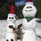 Pet Friendly Holiday Activities in San Diego
