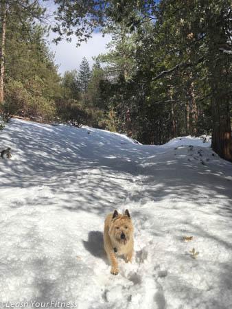 Idyllwild Nature Center Snow Play